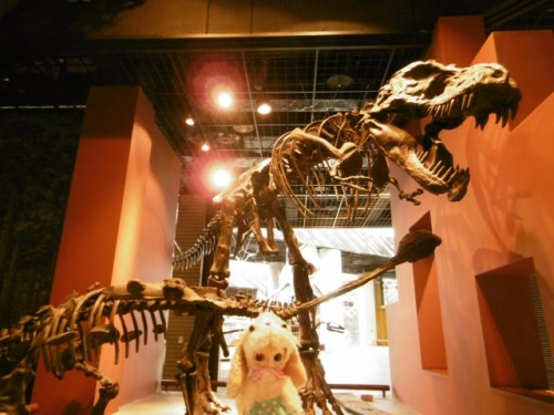 茨城自然博物館♪