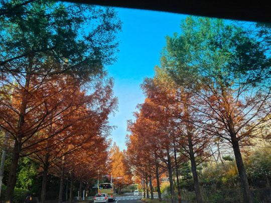 車の中から紅葉