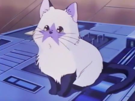 星猫フルハウスの星猫17
