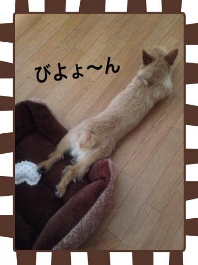 写真_convert_20130406192110