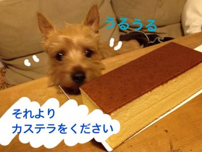 写真_convert_20130423193140