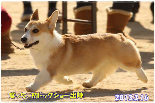 20130825-11.jpg