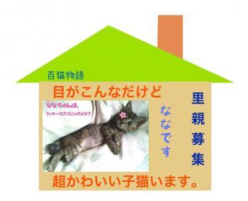 2ねこ_convert_20130712090814