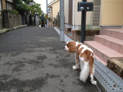 fc2blog_201307301049395d0.jpg