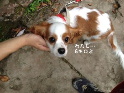 fc2blog_20130917234728b3a.jpg