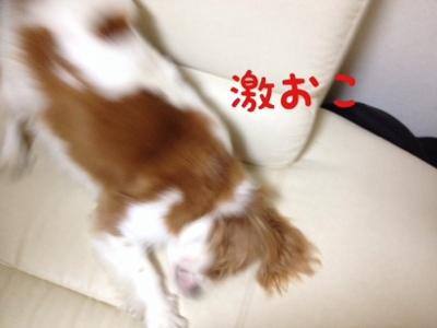 fc2blog_20130924181728193.jpg