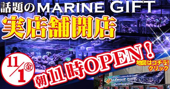 maringift-open1.jpg