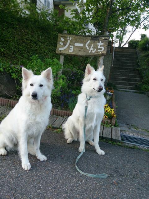 ジョーくんちの前で★リサ★&★エース★