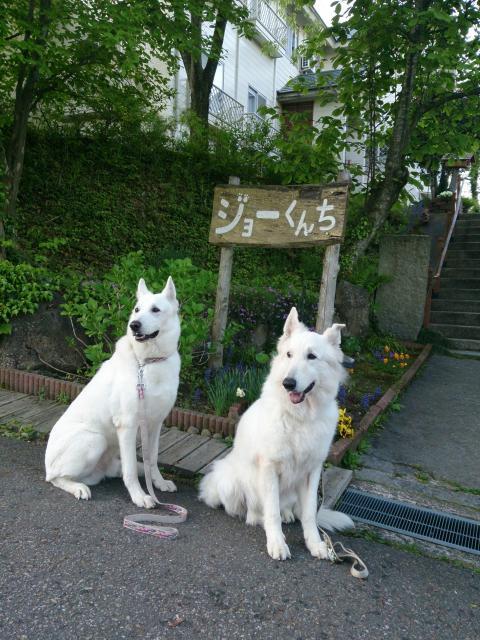 ジョーくんちの前で★レオン★&★アブー★