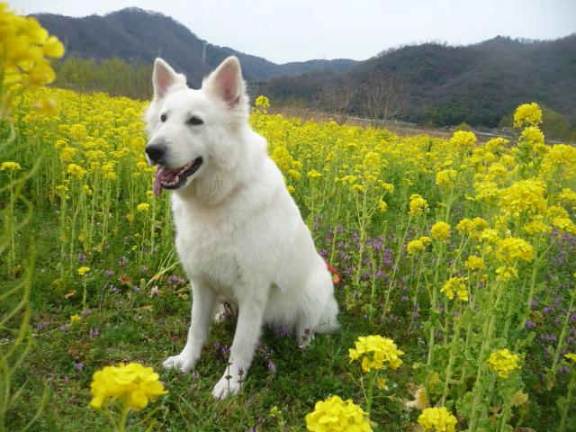 花の綺麗な季節だね~の★リサ★