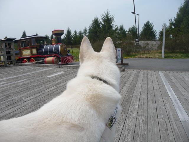 園内を一周する3両編成の乗り物「ロードトレイン」