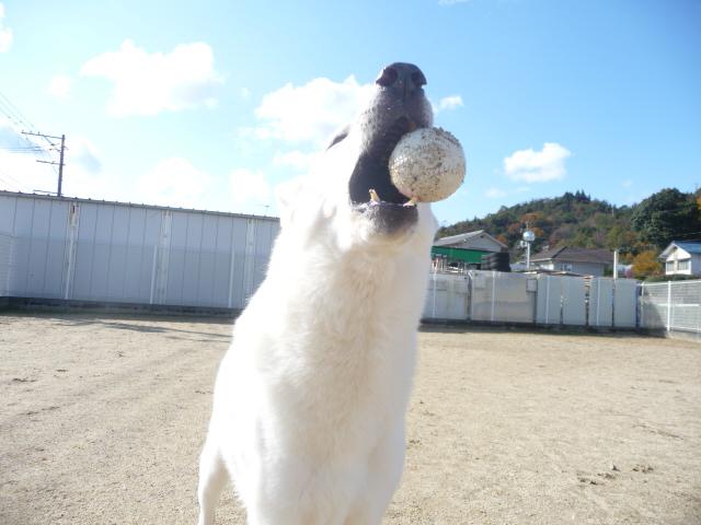 ★レオン★ボール渡さな~い