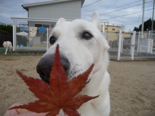 ★レオン★秋のにおいがするね