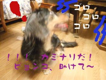 写真825(№232用)1