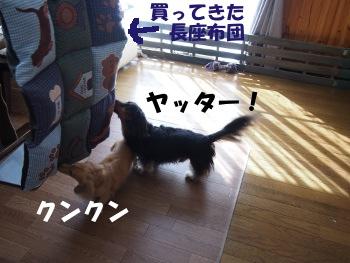 写真883(№241)1