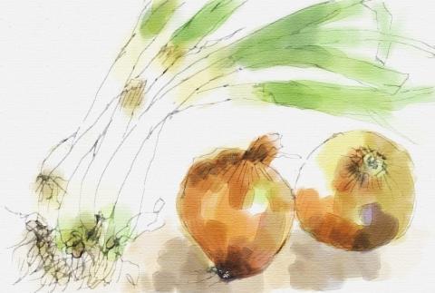 ネギと玉葱