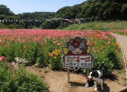 130515花の国b3