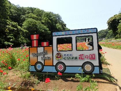 130515花の国b2