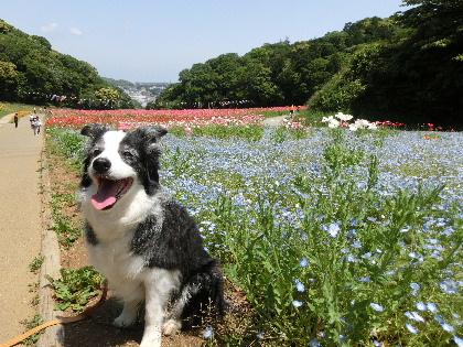 130515花の国b7