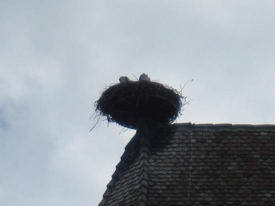 コウノ鳥の巣