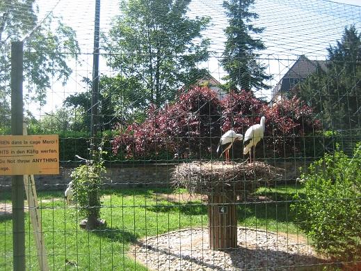 コウノ鳥の飼育公園