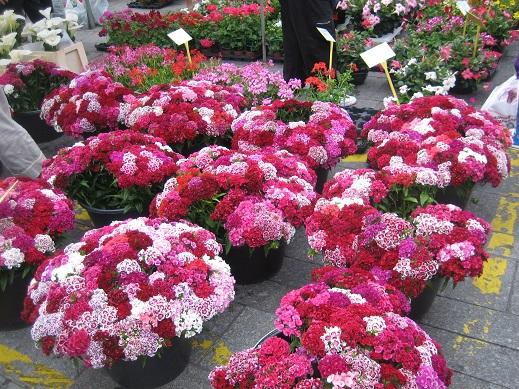 市場の花屋さん