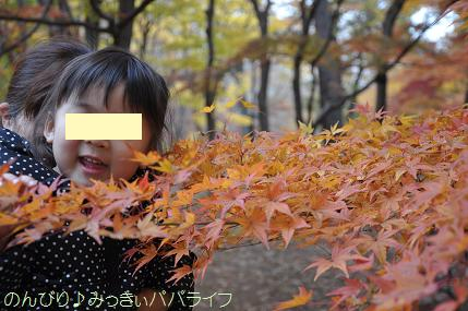 shinrinkoen20141103.jpg
