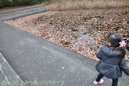 shinrinkoen20141113.jpg