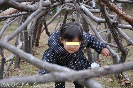 shinrinkoen20141114.jpg