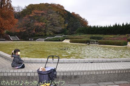 shinrinkoen20141117.jpg