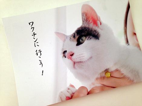 IMG_1126-20141107-3.jpg