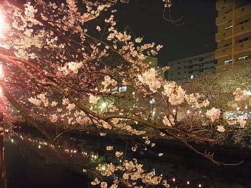 20130327 大岡川桜 (1)