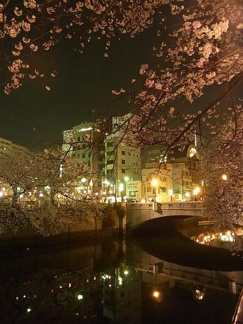 20130327 大岡川桜 (4)