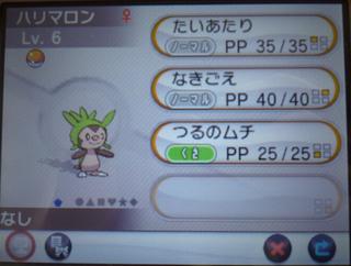 20131018 ハリマロン♀