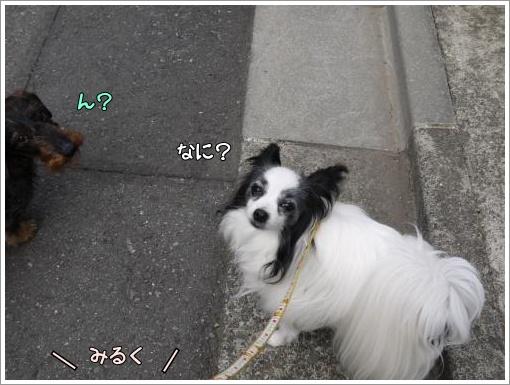 013_convert_20130527094759.jpg