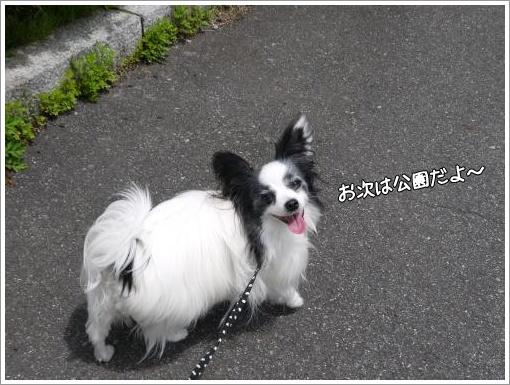 047_convert_20130514124423.jpg