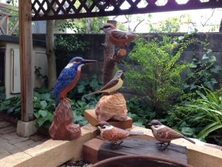 8.30小鳥