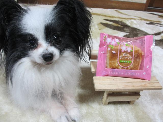 桜ボンディア