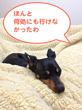 20130512-3.png