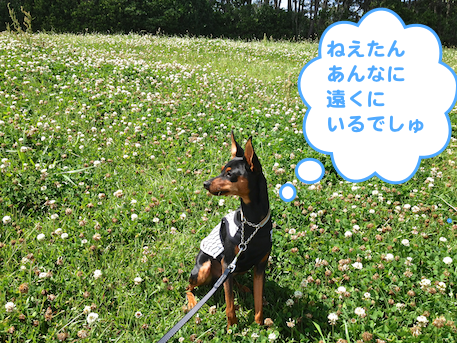 20130603-8.png