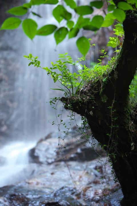 文珠の滝03