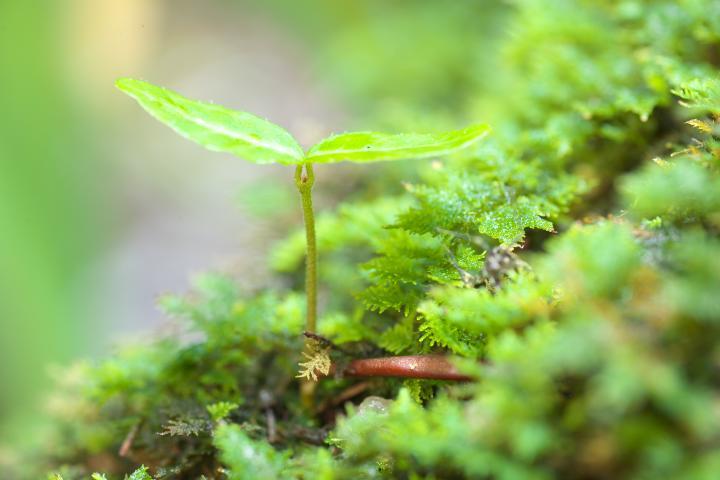 文珠の滝の芽