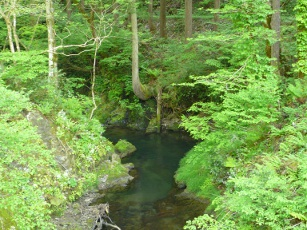 新緑の高倉谷川