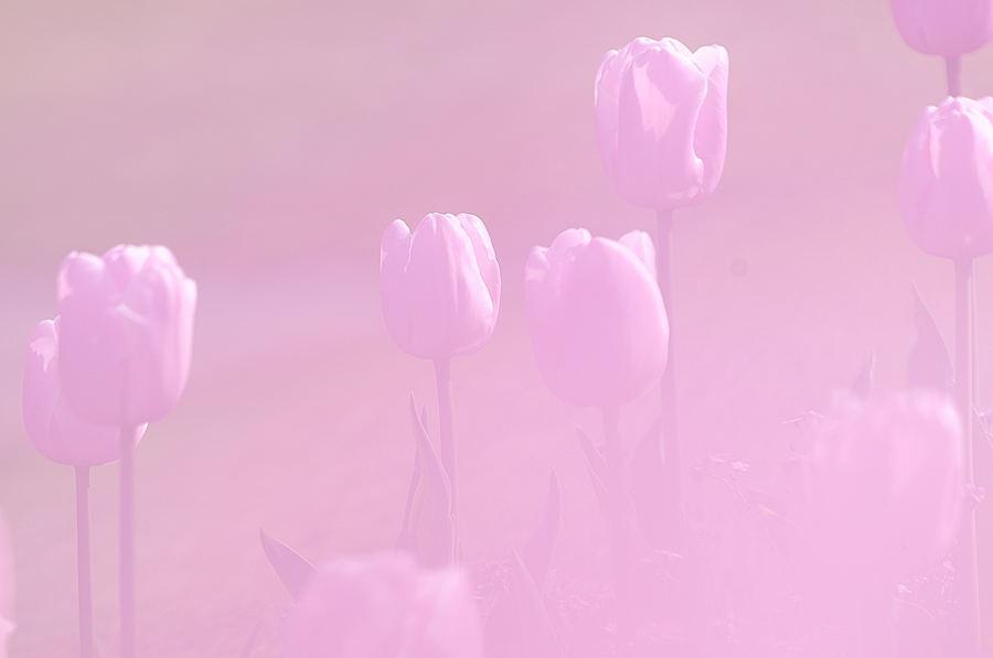 2013-04-11 001 396