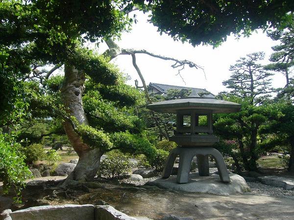 赤松と大きな灯籠