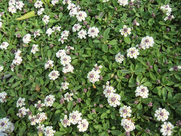 地面に這う草花