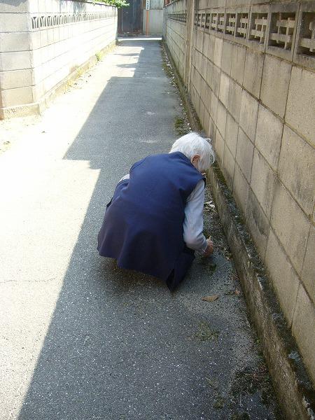 義母の道草