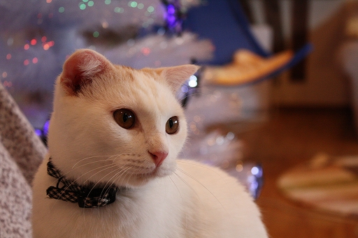 ねこ クリスマス1