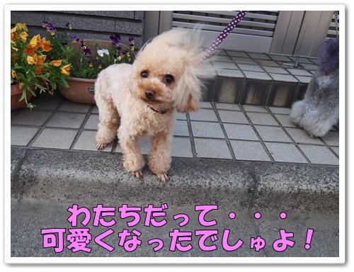 20130508_130.jpg