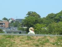 004・阪さ繝斐・_convert_20130511103443